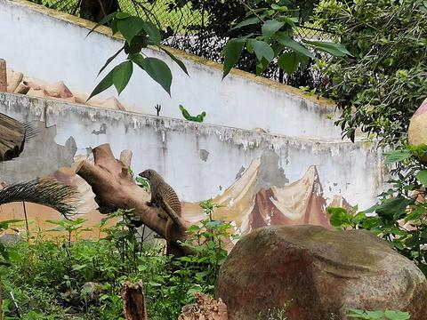 重庆野生动物世界旅游景点图片