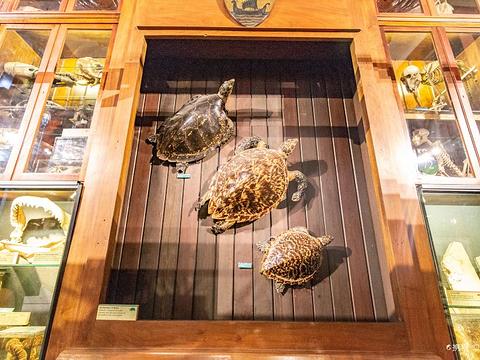 格兰特动物博物馆