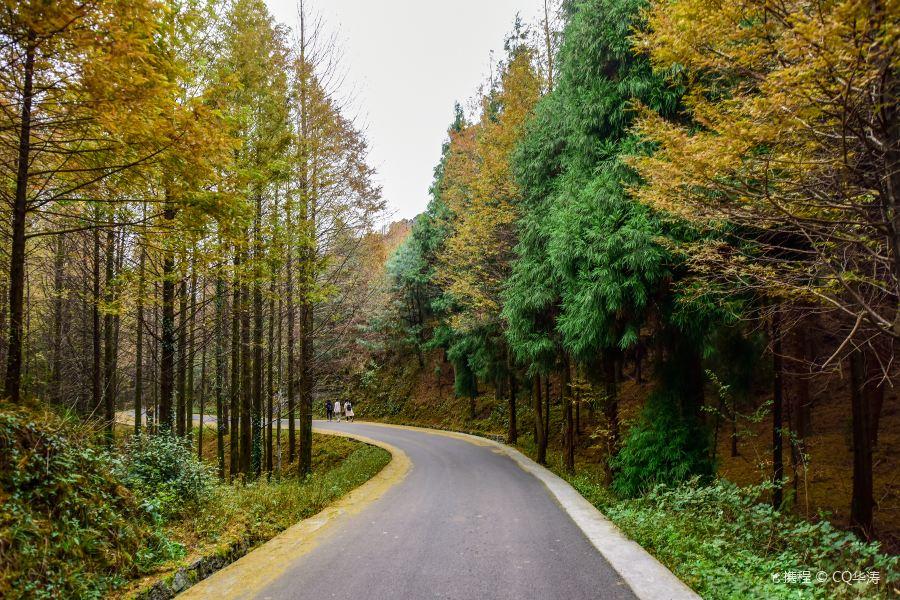 山王坪喀斯特国家生态公园旅游景点图片