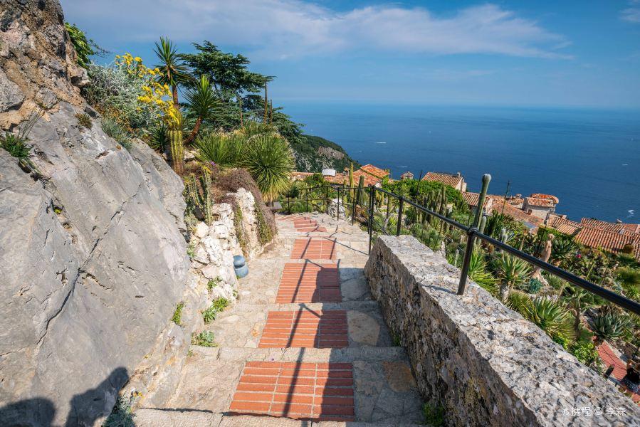 山顶植物园旅游景点图片