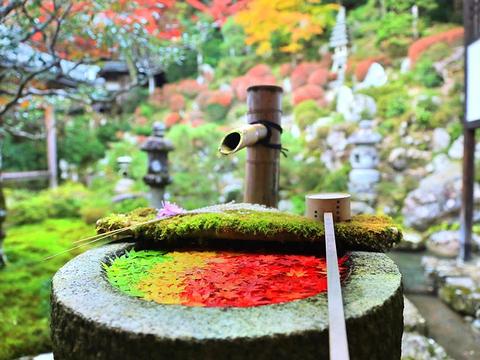 长冈京市旅游图片
