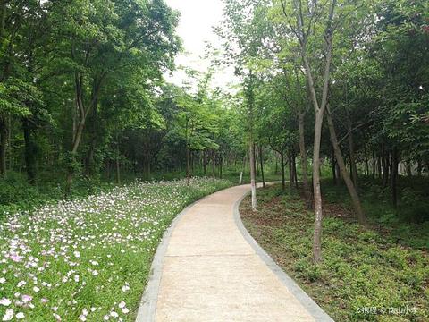 城市生态森林公园的图片
