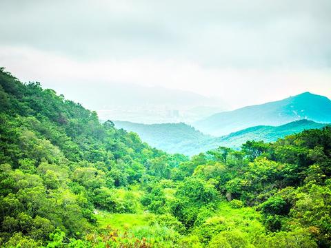 黄花山森林公园