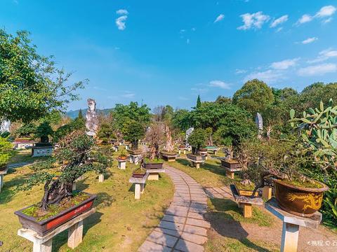 黄果树盆景园的图片