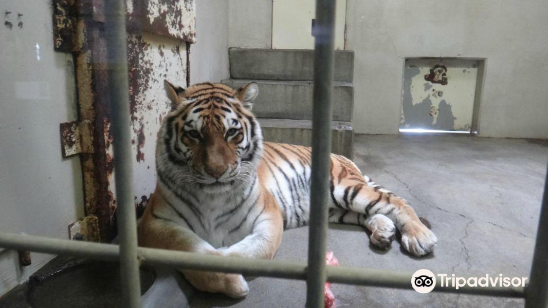 钏路市动物园旅游景点图片
