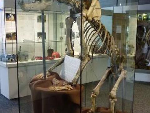 Naturhistorisches Museum (Natural History Museum)旅游景点图片