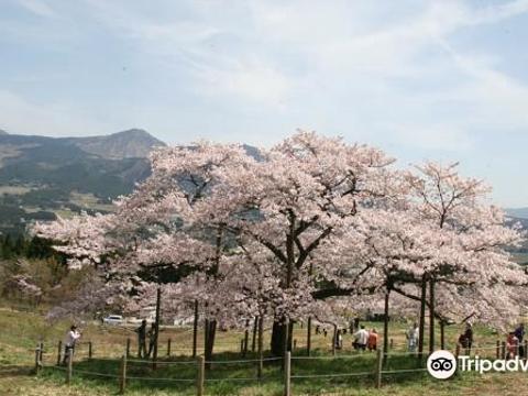 Isshingyo Park旅游景点图片