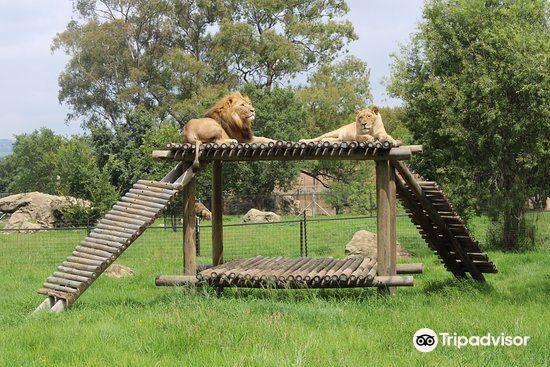 约翰内斯堡动物园旅游景点图片