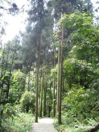 高石梯森林公园旅游景点图片