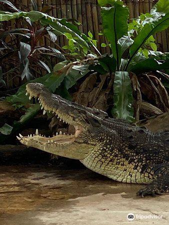 斗亚兰鳄鱼养殖场旅游景点图片