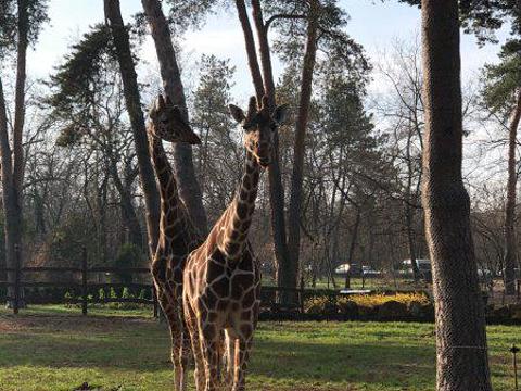 Debrecen Zoo and Botanical Garden旅游景点图片