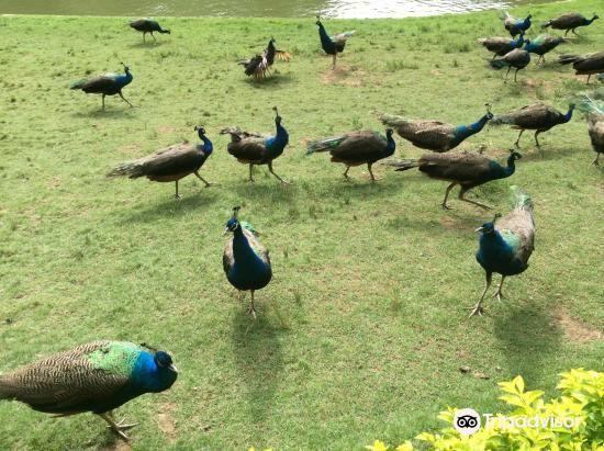 西双版纳孔雀园旅游景点图片