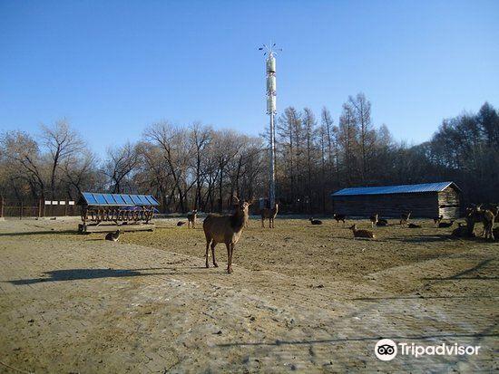 丁玲公园旅游景点图片