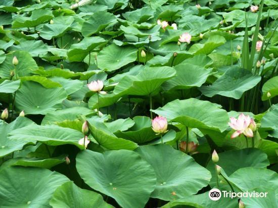 翠湖旅游景点图片