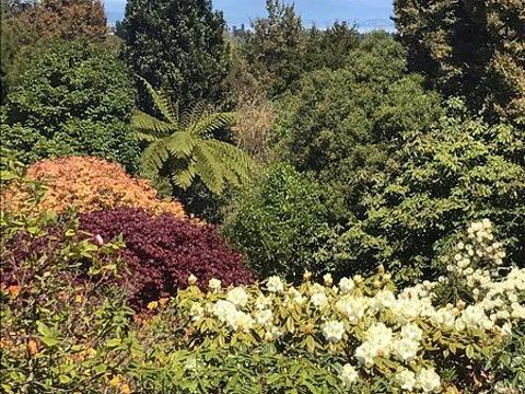 Waipahihi Botanical Gardens的图片