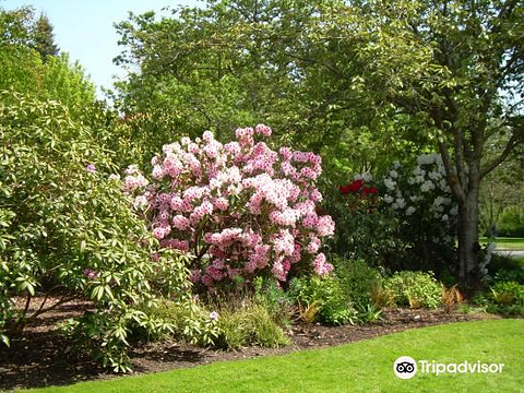 Finnerty Gardens的图片