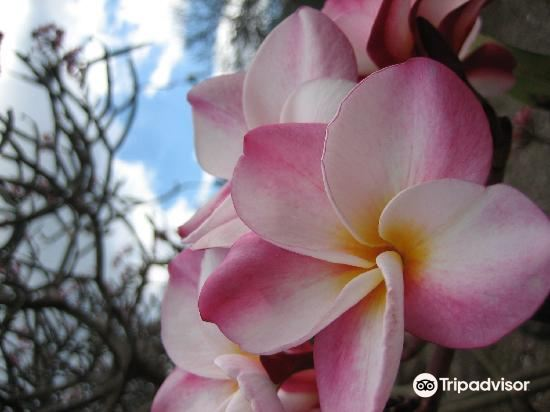 可可火山口植物园旅游景点图片