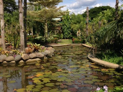 National Orchid Garden旅游景点图片