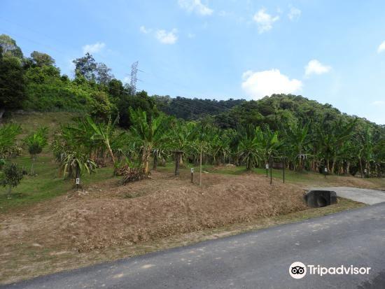 马迪亚哥科技公园旅游景点图片