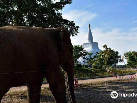 Somawathiya Chaitya旅游景点图片