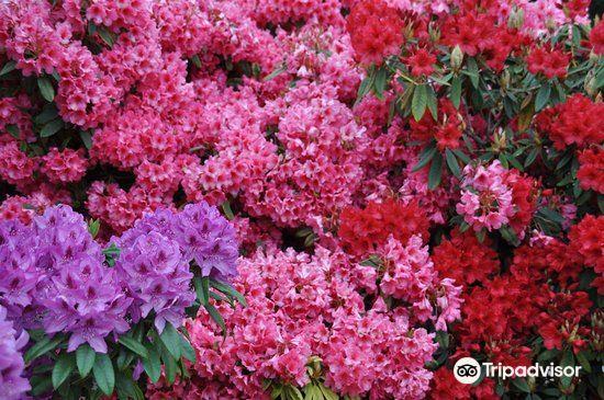 Finnerty Gardens旅游景点图片