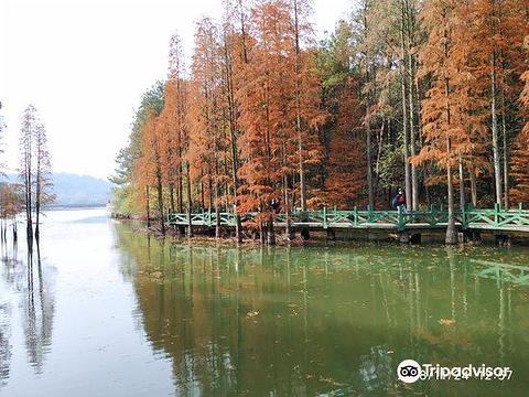 吴家山森林公园