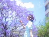 蓝花楹街景