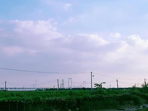 海鸥岛旅游景点图片